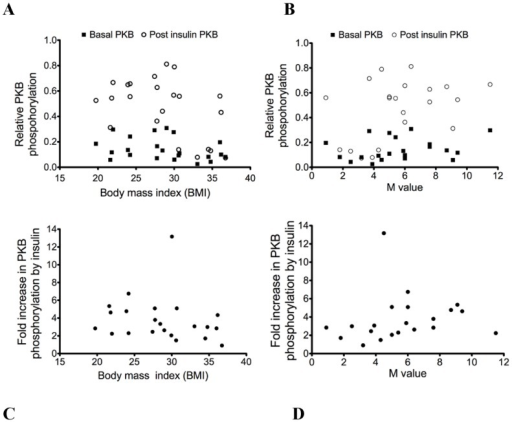 Relationship of PKB phosphorylation with body mass index or M value.Relative PKB phosphorylation according to body mass index (A) or to M value (B) and fold increase in PKB phosphorylation by insulin according to body mass index (r = −.38; p = 0.09) (C) or to M value (r = 0.4; p = 0.08) (D).