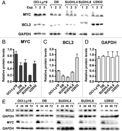 Figure 4. Sensitivity or resistance to PXD101 is not correlated with expression of MYC or BCL2. (A–C) Whole cell extracts were generated from the cell lines shown in 2–3 independent experiments. Equal amounts of protein were separated by SDS-PAGE and subjected to western transfer and immunoblotting with c-myc, BCL2, or GAPDH antibodies. All of the samples shown were run on the same SDS-PAGE gel and blotted simultaneously to accurately measure relative levels of each protein. The results of analysis are shown graphically for c-myc (B) and BCL2 (C). Levels of each protein are expressed relative to those in Exp. One of OCI-Ly19 cells. (D) Cells were treated with PXD101 for the times shown. Whole cell extracts were generated and equal amounts of protein were separated by SDS-PAGE, and subjected to Western transfer and immunoblotting with MYC, BCL2, or GAPDH antibodies. BCL2 shown for SUDHL8 correspond to the species with altered mobility as shown in (A). The results shown are representative of three independent experiments.
