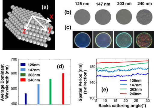 Real-time quantitative structural imaging of nanosphere aggregates using SESF. (a) Illustration of the nanosphere aggregate configuration. At the image plane of the SESF system, (b) bright-field and (c) SESF images of nanosphere aggregates with four different sizes: 125 nm, 147 nm, 203 nm and 240 nm. (d) The average axial spatial period for the dominant structure of each sample. (e) Distribution of axial spatial period on the backscattering angle for each sample.