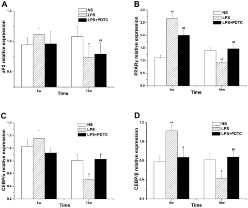 The effects of prenatal exposure to LPS/LPS+PDTC on aP2 (A), PPARγ (B), CEBP/α (C), and CEBP/β (D) expression in adipose tissue in offspring rats.n = 8. Values represent mean ± SD. *p<0.05, **p<0.01 vs. NS; #p<0.05 vs. LPS.