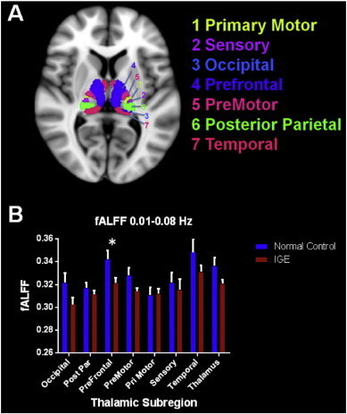 A. Thalamic subregions based on axonal projections to specific cortical regions are depicted. B. Average fALFF values in the 0.01–0.08 Hz bandpass in normal controls and patients with IGE are shown in this graph. In the prefrontal subregion patients with IGE showed reduced fALFF values compared to controls.