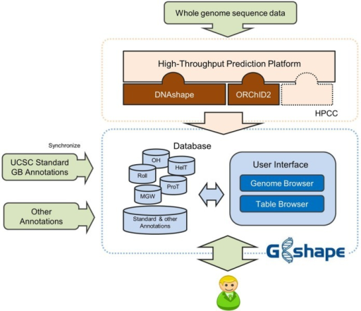 Architecture of the GBshape database. GBshape consists of a high-throughput prediction platform, data depositories and a user interface. DNA shape annotations of entire genomes can be generated by the high-throughput prediction platform, which runs on a high-performance computing cluster (HPCC), and, together with genome sequences and UCSC Genome Browser standard annotations, stored in the data depositories. The user interface provides multiple functionalities for users to either visualize or download structural annotations.
