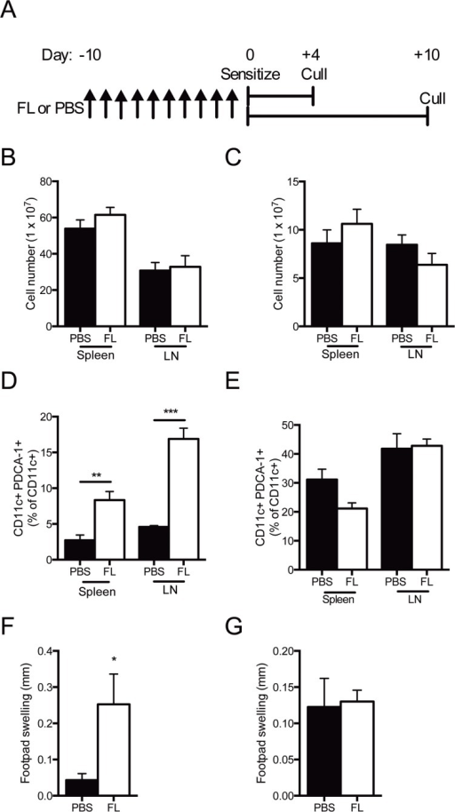 FL therapy expands pDCs but increases delayed type hypersensitivity four days after sensitization to sheep globulin.(A) Experimental design. (B, C) Total spleen and LN cell number 4 and 10 days after sensitization, respectively. (D, E) Proportion of pDCs in the spleen and LN 4 and 10 days post-sensitization to sheep globulin respectively. (F, G) Footpad swelling in mice 4 and 10 days post-sensitization to sheep globulin, respectively. Black bars represent PBS treated mice. White bars represent FL treated mice. n = 4 per group. *P<0.05, **P<0.01.
