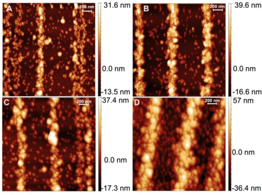 Atomic Force Microscopy (AFM) images of nanoparticle self-assembly onto the same features imaged with SEM in Figure 1, for different coating times: (A) 5 min; (B) 15 min; (C) 30 min; and (D) 60 min.