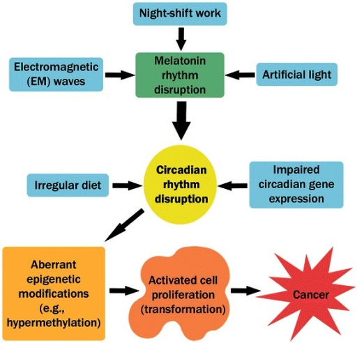 Different circadian disruptive factors that lead to cancer. Circadian rhythms are disrupted in a variety of ways. Several environmental factors, such as night-shift work, exposure to artificial light, and exposure to electromagnetic (EM) waves, result in circadian disruption mostly by altering melatonin rhythms. Irregular diet may also lead to circadian disruption. Moreover, impaired circadian gene expression, due to mutation or epigenetic factors, also results in circadian disruption. Disrupted circadian rhythms both directly and indirectly lead to aberrant epigenetic modifications that result in cell proliferation and cancer.