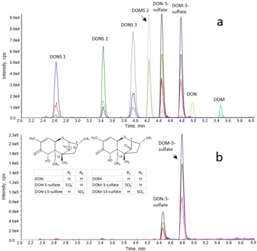LC-MS/MS chromatogram of (a) a standard solution (30 ng/mL of DONS 1, DONS 2, DONS 3, DOMS 2, DON-3-sulfate, DOM-3-sulfate, DON, and DOM) and (b) of an excreta extract of a turkey fed a DOM-contaminated diet (1.6 mg/kg DOM and 0.2 mg/kg DON in feed).