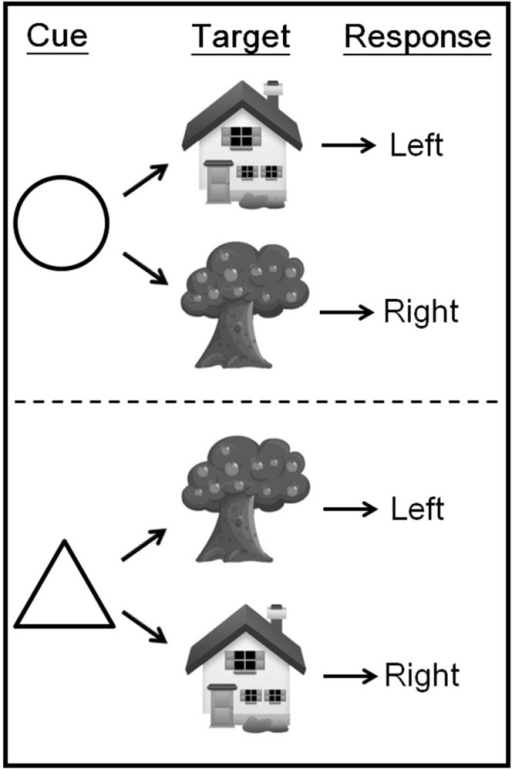 Display of rule types.During scanning, participants viewed an instructional cue for 1 s. After a 0.5 s delay, the target stimulus was presented for 2.5 s. The target required a left- or right-button response, depending on the relevant S–R mapping learned before scanning.