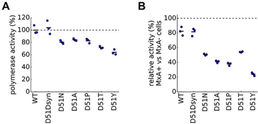 Mutations to site 51 in NP increase MxA sensitivity as measured by polymerase activity.(A) To measure polymerase activity, we transfected unmodified MDCK-SIAT1 cells not expressing MxA with plasmids for NP and the other polymerase-complex proteins as well as a GFP reporter viral RNA. The plot shows the levels of the GFP reporter for each mutant NP relative to wildtype NP, which is set to 100%. (B) To measure the change in MxA sensitivity for each mutation, we transfected MxA-expressing and non-expressing cells with the same plasmids as in (A). For each mutant, the plot shows the levels of the GFP reporter in MxA-expressing cells normalized by the same mutant's activity in non-expressing cells. To determine whether polymerase activity or relative activity of mutant NPs differed significantly from wildtype NP, we computed P-values using the Student's t-test. For all mutant NPs other than D51Dsyn, the differences were significant with P<0.05 for polymerase activity and P<0.01 for relative activity.