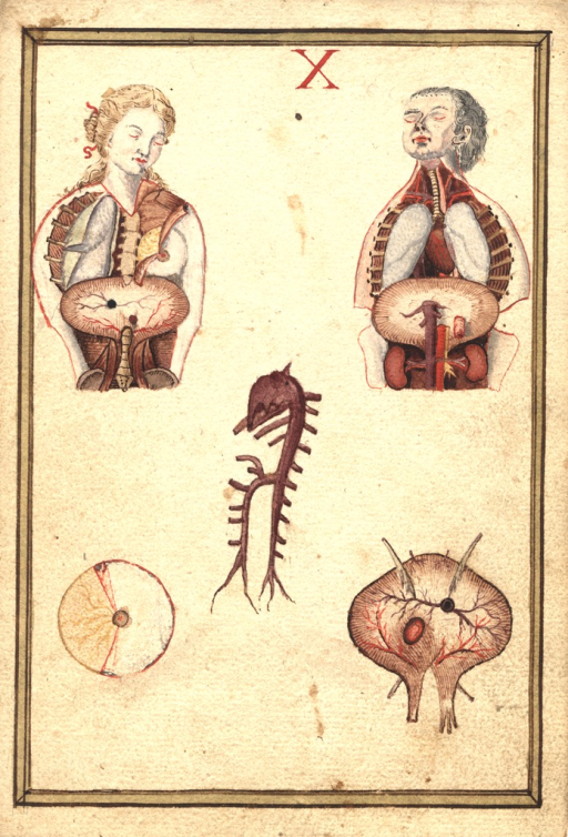 <p>The skin of a man and woman's chests flayed to expose organs.</p>