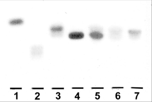 "Sulfatide in pancreas of ob/ob mice. Thin layer chromatography of sulfatide in whole pancreas isolated from ob/ob mice given C16:0 sulfatide. The extraction and lipid isolation procedure as well as the TLC-ELISA method are described under ""Methods"". Lipids corresponding to approximately 3–4 mg tissue protein were applied (one representative plate is shown). Lane 1, seminolipid (120 pmol); lane 2, sulfated lactosylceramide (20 pmol); lane 3, sulfatide (40 pmol); lane 4, C16:0 sulfatide standard (25 pmol); lane 5, 6 hours after administration; lane 6, 24 hours after administration and lane 7, sulfatide isolated from untreated ob/ob mouse."