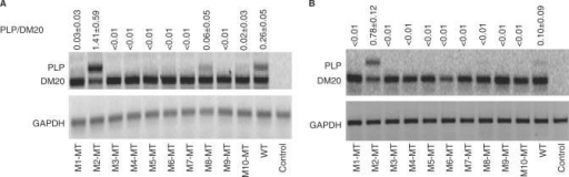 Mutation of a G-rich sequence activates inclusion of PLP exon 3B. Results of RT-PCR assay of PLP and DM20 from total RNA isolated from Oli-neu cells (30 PCR cycles) (A) and L cells (35 PCR cycles) (B) transfected with wild-type PLP-neo (WT) and M1-MT to M10-MT. The PLP/DM20 ratios ± SD are shown (n = 3). GAPDH is used for accuracy of RNA loading (25 PCR cycles). Control represents the untransfected cells. The increase in PLP/DM20 ratio with the M2-MT construct is statistically significant (P = 0.017 for Oli-neu cells and P < 0.002 for L cells).
