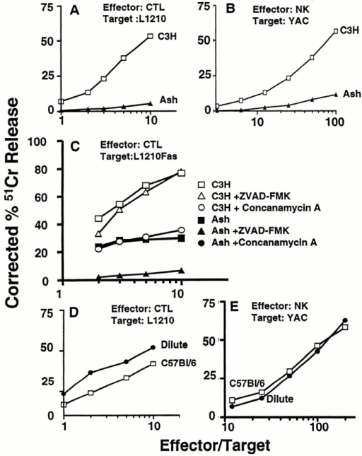 In vitro cytotoxicity of cytotoxic T and NK lymphocytes from ashen and dilute mice. (A) Activity of secondary CTL from ashen versus C3H control mice on Fas-negative L1210 targets, redirected with anti-CD3xanti-TNP. (B) NK activity of spleen cells from poly I:C–injected ashen versus C3H mice. (C) Activity of secondary CTLs from ashen versus C3H control mice on Fas-transfected L1210 targets, redirected with anti-CD3xanti-TNP. Solid circles are hidden by solid squares symbols in this graph. (D) Activity of primary CTLs from dilute versus C57Bl/6 control mice on Fas-negative L1210 targets, redirected with anti-CD3x–anti-TNP. (E) NK activity of spleen cells from poly I:C–injected dilute versus C57Bl/6 mice.