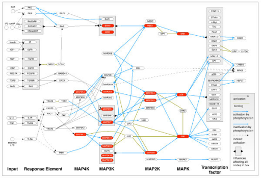 An Overview Of Mammalian MAPK Signaling Pathways This Openi - Omnigraffle us map