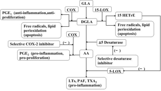 Mechanisms of dihomo-γ-linolenic acid in anti-proliferation of diseases. DGLA-derived PGE1 has been identified as possessing anti-inflammatory properties that differentiate it from AA-derived PGE2. DGLA could be metabolized into the 15-lipoxygenase product, 15-HETrE, which is capable of inhibiting the synthesis of AA-derived 5-lipoxygenase metabolites and further attenuates the pro-inflammatory products from AA. All types of free radicals (superoxide anion, H2O2, hydroxyl radicals) and lipid peroxides play a role in the induction of apoptosis of tumor cells by the metabolism of DGLA. Selective COX-2 inhibitor could stop AA from converting to PGE2 which are able to stimulate cancer cell proliferation. DGLA may be accumulated through blocking the conversion to AA mediated by selective desaturase inhibitor.