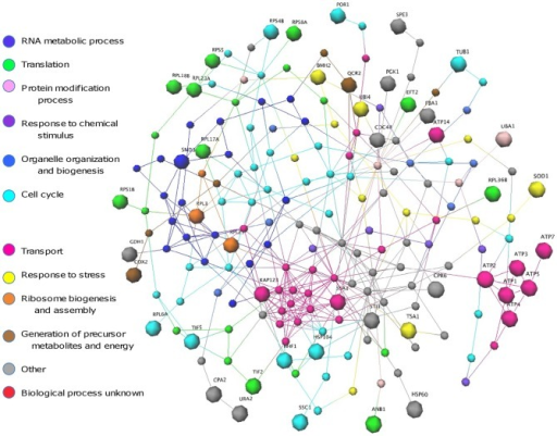 Drug response network drawn as in Figure 4 and coloured using Gene Ontology data.Network analysis reveals clustering of protein with similar functions and hub proteins with a high degree of connectivity. Potential targets for synergistic therapies are indicated in Figure S2. [GEOMI Force Directed Layout: spring = 50, origin = 80, repulsion = 12, planar = 100].