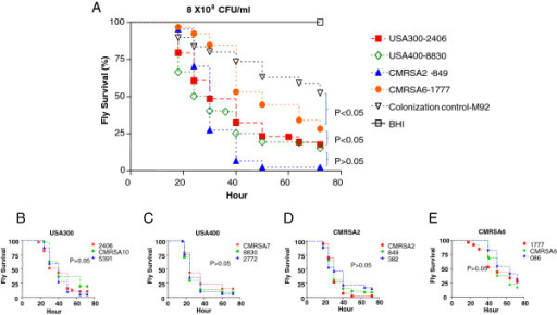 MRSA strains demonstrated different killing activities against D. melanogaster. (A) Kaplan-Meier survival plots of Drosophila pricked with the representative clinical MRSA strains. (B-E) Three clinical isolates within a clonal group demonstrated similar levels of killing activity: (B) USA300 isolates (2406, CMRSA10, 5391); (C) USA400 isolates (CMRSA7, 8830, 2772); (D) CMRSA2 isolates (CMRSA2, 849, 382); (E) CMRSA6 isolates (1777, CMRSA6, 086).