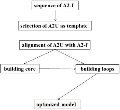 Schematic of the methodology for homology modelingof A2-f.