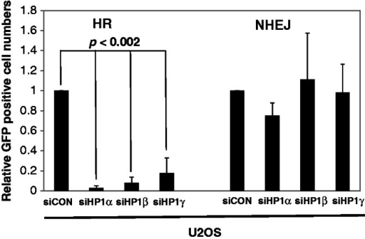 HP1 is required for HR repair. U2OS-NHEJ cells and U2OS-HR cells were transfected by individual siRNAs targeting the three respective HP1 subtypes on day one. The I-SecI expression construct was transfected at 24 h after siRNA transfection, and cells were incubated for additional 48 h. The numbers of GFP-positive cells were determined by fluorescence-activated cell sorting (FACS). GFP- and DSred-expression constructs were co-transfected to normalize for transfection efficiency in the FACS assays. The assays were repeated at least four times (n = 5), and the average relative numbers are presented as the mean ± SD.