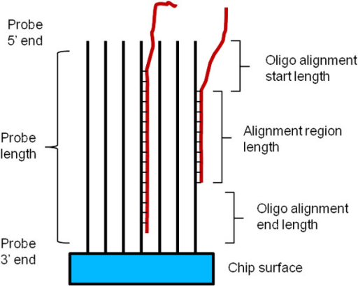 Explanation of probe filtering metrics for eggplant transcripts. Parameters used for filtering of Torvum probes based on homology to eggplant transcript are shown. Due to the steric constraints in the crowded 3' attachment to chip region, the 3′ region of probes is less accessible and therefore mismatches in the region are less influential.