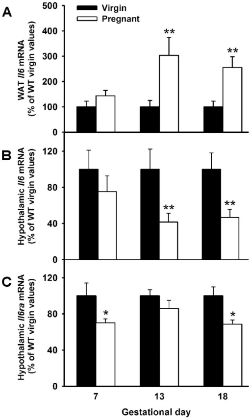 Reduced hypothalamic Il6 and Il6ra but increased WAT Il6 mRNA expression in pregnant WT mice.12 weeks old WT (C57BL6) mice were time-pregnant and samples for RNA extractions were obtained from WAT and hypothalamus at early, mid and late pregnancy: gestational days 7 (n = 5), 13 (n = 8) and 18 (n = 6), respectively. Age matched virgin females were used as controls (n = 5–9). A–C. Gestational expression pattern of Il6 mRNA in adipose tissue (A) and hypothalamus (B), and hypothalamic Il6ra mRNA levels (C) were determined by RT-qPCR. Expression of genes were measured in duplicates, normalized to 18s and expressed in percentage to WT virgin control values. The bars represent the mean ± SEM. Two-tailed t-test, *P<0.05 and **P<0.01 versus corresponding WT virgin controls.