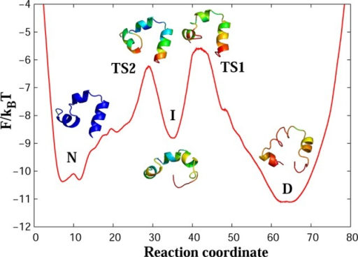 Free-energy profile forwild-type villin (HP35) along the putativeoptimal reaction coordinate. [Legend: D, the denatured basin; I, theintermediate basin; N, the native basin; TS1, the first transitionstate; and TS2 the second transition state.] The main folding barrierbetween D and I states is ΔF/kBT ≈ 5.5. The representative structuresfor the regions of the landscape show a trajectory snapshot closestto the average structure of the region. Colors code the root-mean-square(rms) fluctuations of atomic positions around the average structurefrom 1.5 Å (blue) to 7 Å (red).