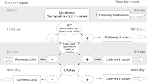 Flowchart For Identifying Gram Positive Cocci In Cluste Open I