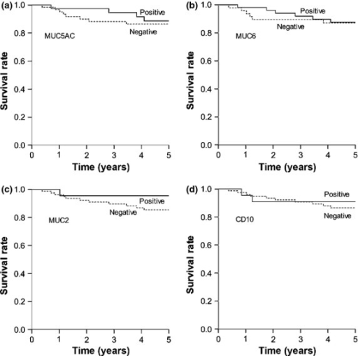 Cancer-specific survival in 101 patients with differentiated-type carcinoma based on phenotypic marker expression: (a) MUC5AC, (b) MUC6, (c) MUC2, and (d) CD10. For each marker, there was no significant difference between survival rates of patients whose tumors were positive or negative for the marker (MUC5AC, P = 0.303; MUC6, P = 0.307; MUC2, P = 0.387; and CD10, P = 0.470).