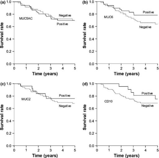 Cancer-specific survival in 113 patients with undifferentiated-type carcinoma based on marker expression: (a) MUC5AC, (b) MUC6, (c) MUC2, and (d) CD10. For each marker, there was no significant difference between survival rates of patients whose tumors were positive or negative for the marker (MUC5AC, P = 0.753; MUC6, P = 0.226; MUC2, P = 0.745; and CD10, P = 0.328).