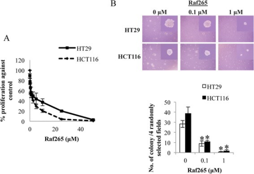 The anti-proliferative effect of Raf265 on HT29 and HCT116 cells. A. Cells were treated with Raf265 at 0–50 μM and MTT assay was performed. B. Cells were suspended in the solidified agarose at the indicated concentrations of Raf265. Representing images under a phase-contrast microscopy at 40× magnification and an amplified view at 400× magnification were shown at the upper panel. The number of colony formed was then counted and the bar chart presenting the average number of colony formed was shown at the lower panel.