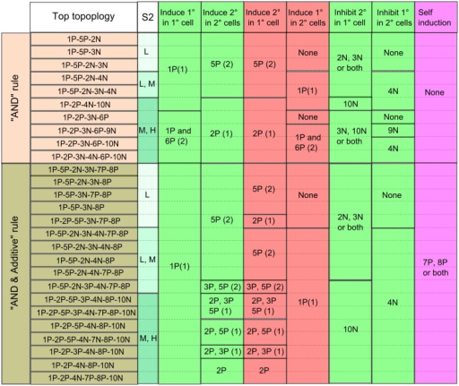 "A map of links for each top topology to the decomposed functions for VPC patterning.(Left columns) Top topologies ranking within the top 5 for each S2 are listed. Both cases of the ""AND"" rule and the ""AND & Additive"" rule are included. (Middle column) The S2 column shows the S2 levels at which the topologies performed the patterning robustly. L, low level; M, medium level; H, high level. (Right columns) For each topology (each row), its links are listed in different columns according to their functions. It should be noted that among these functions, inducing 2° fate in 1° cell and 1° fate in 2° cell (in red color) have adverse effects on the topologies' performance of patterning. The numbers in parentheses indicate the sequential order of the functions for positive regulation. The same number means the functions have no causal or sequential relationship."