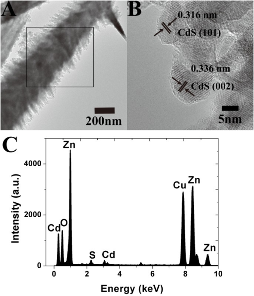 ZNC/ZNS nanostructures loaded with CdS QDs.(A) a TEM image, (B) an HRTEM image, and (C) EDS.