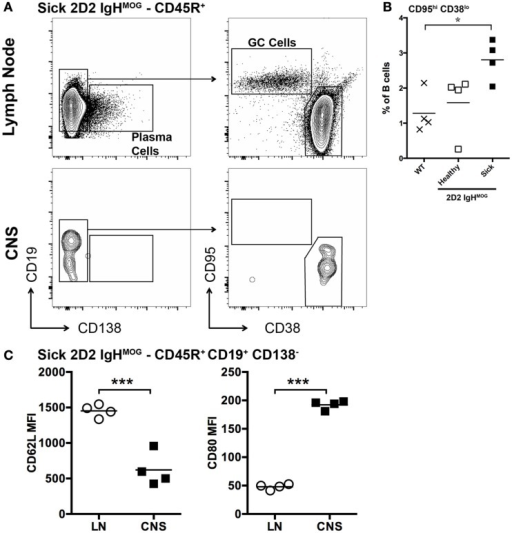 Characterization of B cells in the lymph nodes and spinal cords of 2D2 IgHMOG mice with sEAE. (A) Lymph nodes and spinal cords were harvested from healthy wild type mice as well as 2D2 IgHMOG mice that had either developed disease (sick – 20–30 days post onset) or not (healthy – age matched). Cells were prepared and analyzed by FACS. CD45R+ cells were first selected. An example of the gating strategy to identify Plasma cells [(A) – left] and B cells with a GC phenotype [(A) – right] from the CD45R+ pool is shown for lymph node and spinal cord cells isolated from a single sick mouse. (B) Quantification of CD95hi CD38lo germinal center B cells in the lymph nodes of wild type and healthy or sick 2D2 IgHMOG mice. Each symbol represents an individual mouse. *p < 0.05. (C) Comparison of CD62L (left) and CD80 (right) expression by CD45R+ CD19+ CD138− B cells isolated from lymph nodes or the CNS of the same mouse. Each symbol represents an individual sick mouse. ***p < 0.001 as determined by paired Student's t-test. One representative of two experiments shown.