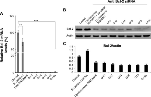 (A) Real-time polymerase chain reaction analysis and (B) representative Western blot analysis of the Bcl-2 gene expression in HeLa cells after transfection with NP-Bcl-2-siRNA. (C) Densitometry graph demonstrating Bcl-2 protein expression in HeLa cells post transfection with NP-Bcl-2-siRNA. Untreated and transfected with non-silencing siRNA serves as controls. Cells transfected with Lipofectamine 2000 served as the positive control. Data represented in the graph are expressed as a ratio to the control. All the data are normalized to the house-keeping gene β-actin.Notes: Values are mean ± standard deviation; n=3; ***P<0.001.Abbreviations: NPs, nanoparticles; siRNA, short interfering RNA.