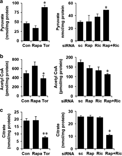 mTOR inhibition reduces metabolic flux to the mitochondria. (a–c) Cells were treated/transfected as described earlier and pyruvate, acetyl-coA and citrate levels were measured in triplicate samples in whole-cell lysates and normalized to the total cellular protein as described in Materials and Methods. All panels: n=4, *P<0.05, **P<0.01 compared with Con or sc cells.