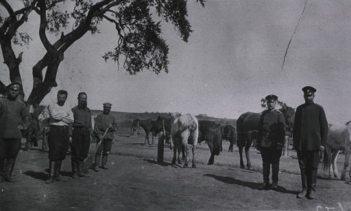 <p>Personnel and horses at a veterinary lazaret.</p>