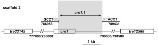 A comparison of the cre1 locus in Trichoderma reesei QM6a and RUT C30. The cre1 gene is located on scaffold 2. The respective location of the neighboring genes is also given. The cre1.1 mutation in RUT C30 comprises a region of 2478 bp, which is highlighted by a grey box. The two nucleotides given in grey could not be assigned unambiguously to one of the ends of the gap.