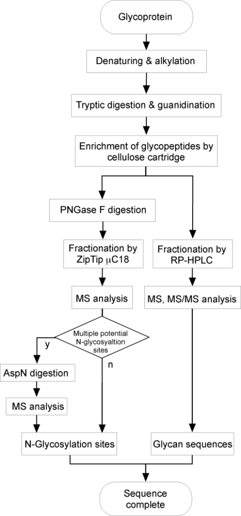 Flow Chart Of The Sequence Analysis Of A Glycoproteint Open I