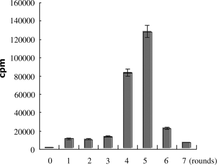 The monitoring of enrichment of selection process by binding assay of radiolabeld pools with S. aureus. The number 0 represents the naive library and the numbers 1–7 represents the first to seventh round selected pool, respectively. Twenty-five picomoles of each radiolabeled pool were incubated with 107S. aureus 8325-4 for 45 min. The binding capacity was detected by scintillation counting.