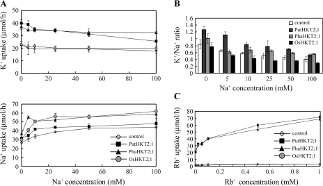 (A) Concentration dependence of K+ uptake (upper panel) or Na+ influx (lower panel) in yeasts expressing HKT2;1 of P. tenuiflora, reed plant, or rice in the presence of 5, 10, 25, 50, 100 mM NaCl, and 50 μM KCl. Strain 9.3 yeast cells were transformed with empty vector pAUR123 (open diamonds) or with the vector containing PutHKT2;1 (closed squares), PhaHKT2;1 (closed triangles) or OsHKT2;1 (grey circles) cDNA. (B) K+/Na+ ratio of yeasts cells transformed with empty plasmid (open bar) or with plasmid containing PutHKT2;1 (dark-grey bar), PhaHKT2;1 (light-grey bar) or OsHKT2;1 (black bar) cDNA treated as in (A). (C) Concentration dependence of Rb+ uptake in yeasts expressing HKT2;1 of P. tenuiflora, reed plant, or rice. Yeast strains and symbol are indicated as in (A). Results are expressed as means ±SE (n=3).