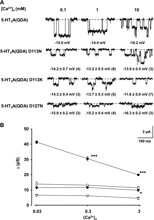 Mutations in the ECD of the 5-HT3A(QDA) construct attenuate suppression of γ by extracellular Ca2+. A, exemplar single channel currents for the 5-HT3A(QDA), 5-HT3A(QDA) D113N, 5-HT3A(QDA) D113K, and 5-HT3A(QDA) D127N constructs recorded from outside-out patches held at −80 mV using the Cs+-based patch pipette solution and an extracellular solution containing 95 mm [Na+]o and either 0.1 mm (solution E3), 1 mm (solution E4), or 10 mm (solution E5) [Ca2+]o. Note that the mutations alleviate the suppression of single channel currents by Ca2+ in comparison with the 5-HT3A(QDA) receptor. The mean E5-HT ± S.E. for each construct in such solutions are given beneath the appropriate currents with n values in parenthesis. B, single channel conductance versus Ca2+ activity ((Ca2+)o) for the 5-HT3A(QDA) (filled circles), 5-HT3A(QDA) D113N (open circles), 5-HT3A(QDA) D113K (inverted solid triangles), and 5-HT3A(QDA) D127N (inverted open triangles) receptor constructs. Single channel conductances were calculated using the values for E5-HT given in A. Data points indicate the mean of 3–6 single channel amplitude measurements from separate patches, and error bars depict S.E. Shown is statistical significance compared with that obtained for the 0.1 mm Ca2+, 95 mm Na+ mixture, as determined by one-way ANOVA with post hoc Dunett's test (* and ***, p < 0.05 and p < 0.001, respectively). Data for the 5-HT3A(QDA) receptor are from Livesey et al. (20).