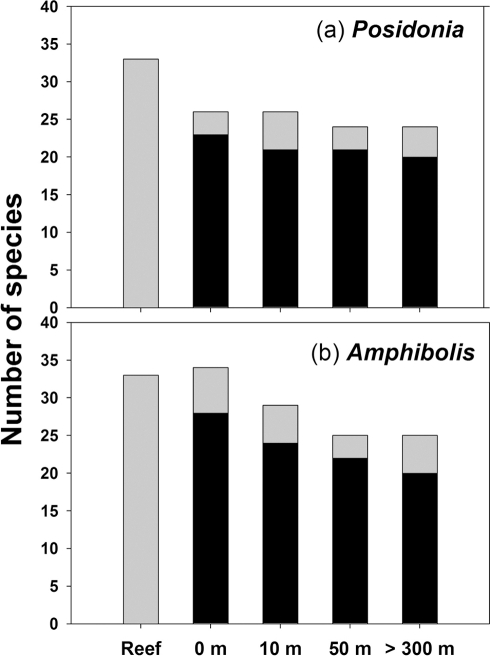 Total number of gastropod species on reefs and seagrass meadows with varying proximity to reefs.(a) Posidonia; (b) Amphibolis. The number of shared taxa between reefs and seagrass meadows at varying proximity from reefs is nested (i.e. black bar) inside each bar.