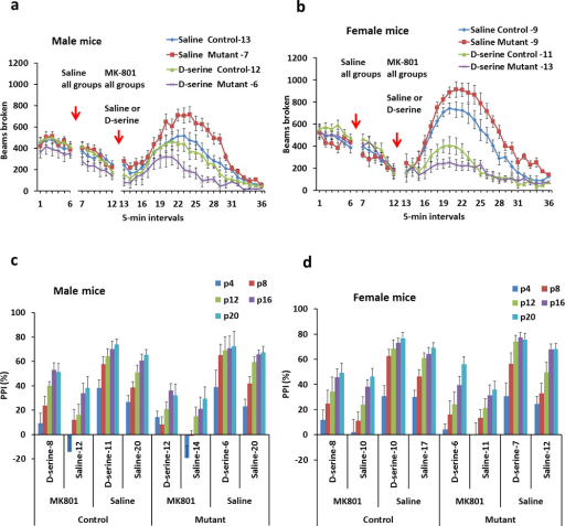 DISC1 mutant mice exhibit greater responses to an NMDA antagonist, MK-801, and D-serine treatment[a] Locomotor activity in open field of male mice before and after treatment with MK-801 (0.3 mg/kg, i.p.) followed by saline or D-serine injections (2.7 g/kg, i.p.). Compared to control male mice, mutant male mice display significantly greater activity in response to MK-801. Compared to control male mice, mutant mice also exhibit significantly greater sensitivity to the ameliorative effects of D-serine. Numbers of mice in each group are indicated on the graph.[b] Locomotor activity in open field of female mice before and after treatments with MK-801 (0.3 mg/kg, i.p.) followed by saline or D-serine injections (2.7 g/kg, i.p.). Compared to control female mice, mutant female mice exhibit significantly higher locomotor activity in response to MK-801. Compared to control female mice, mutant female mice show significantly greater sensitivity to the ameliorative effects of D-serine. Numbers of mice in each group are indicated on the graph.[c] PPI of the acoustic startle of male mice before and after treatment with MK-801 (0.3 mg/kg, i.p.) followed by saline or D-serine injections (2.7 g/kg, i.p.). p4–20 are the intensities of pre-pulses above the background noise level (70dB). Compared to control male mice, mutant male mice display greater MK-801 induced impairment in PPI at P4 and P8. Compared to control male mice, mutant mice also exhibit significantly greater sensitivity to the ameliorative effects of D-serine at P4. Numbers of mice in each group are indicated on the graph.[d] PPI of the acoustic startle of female mice before and after treatment with MK-801 (0.3 mg/kg, i.p.) followed by saline or D-serine injections (2.7 g/kg, i.p.). Numbers of mice in each group are indicated on the graph.