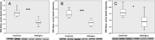 Allergy decreases the levels of insulin-degrading enzyme (IDE) in the mouse brain. Western blot analysis showed a decrease in IDE levels in the hippocampus (A), frontal cortex (B) and hypothalamus of allergic mice compared to controls (C). The data were analyzed using Student's t-test. The boxplot indicates the first two quartiles with the median, and the whiskers indicate the third and fourth quartiles (n = 8 mice per group). Only six control mice were used for the hypothalamus because two samples were lost during sonication. The images below the graph indicate the immunoblotting of IDE. Asterisk, p < 0.05, triple asterisk p < 0.001.