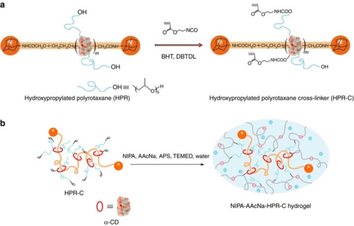 Preparation of the polyelectrolyte hydrogels using nonionic PR cross-linker.(a) Preparation of HPR-C from HPR, 2-acryloyloxyethyl isocyanate, DBTDL (catalyst) and BHT (polymerization inhibitor) in DMSO. (b) Preparation of the NIPA–AAcNa–HPR-C hydrogel from HPR-C (cross-linker), NIPA (main monomer), AAcNa (comonomer), APS (initiator) and TEMED (accelerator) in water.