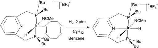 Reaction of [(C5H3N(CH2P(tBu)2)2)IrH(C8H11)(NCCH3)]BF4 (1) with H2 forms the indicated cis-dihydride complex.18