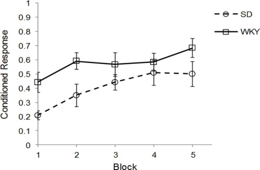 Strain differences in classical eyeblink conditioning. Wistar-Kyoto (WKY) and Sprague Dawley (SD) rats were trained in delayed classical conditioning of the eyeblink response. A session consisted of five blocks of 20 trials. WKY rats acquired eyeblink conditioning significantly faster and to a greater extent than SD rats, as demonstrated by higher levels of conditioned responses.