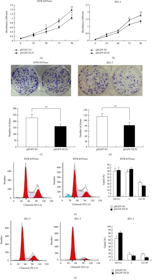 Effects of decorin on growth and proliferation of trophoblast cells. ((a) and (b)) The proliferation ability of HTR-8/SVneo and JEG-3 cells was inhibited in pEGFP-DCN group compared to control, as identified by MTT assays. ((c) and (d)) Colony-forming assay showed a decrease of cells proliferation in pEGFP-DCN group compared to empty vector both in HTR-8/SVneo and in JEG-3 cells. ((e) and (f)) Cell-cycle analysis was performed 48 h following the treatment of HTR-8/SVneo and JEG-3 cells with pEGFP-DCN or empty vector. The DNA content was quantified by flow cytometric analysis. Values are represented as mean ± SEM (∗∗P < 0.01).