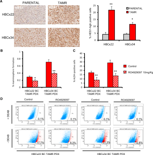 HBCx22 and HBCx34 TAMR PDXs Express High Levels of HES1NOTCH4 inhibitor RO4929097 targets CSCs in tamoxifen-resistant (TAMR) PDXs.(A) Representative micrographs and quantification of HES1 expression determined by immunohistochemistry. Scale bars, 100 μm.(B–D) HBCx22 and HBCx34 TAMR PDXs treated in vivo for 14 days in the presence or absence of the GSI RO4929097 (10 mg/kg/day, oral gavage). (B) MFE (%). (C) Percentage of ALDH-positive cells. (D) Representative FACS plots of ALDEFLUOR assay. ALDH-positive cells were discriminated from ALDH-negative cells using the ALDH inhibitor DEAB.Data are represented as mean ± SEM. ∗p < 0.05; ∗∗p < 0.01.See also Figure S4.