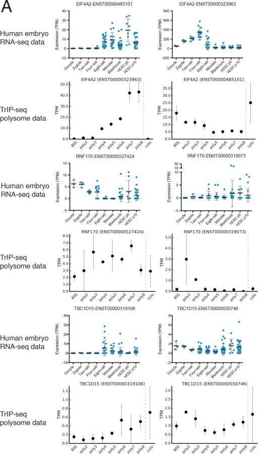 Additional examples of transcript isoforms that exhibit differential expression in human embryos and differential translation in TrIP-seq data.DOI:http://dx.doi.org/10.7554/eLife.10921.016