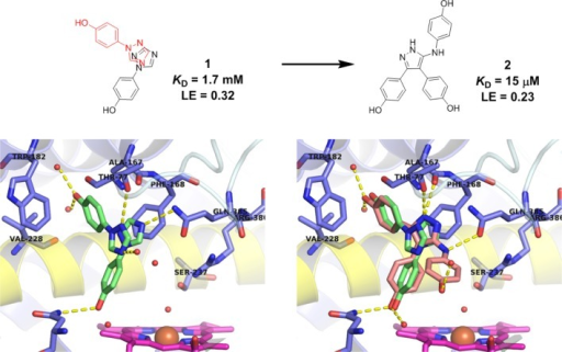 Fragment merging and in silico directed optimization of fragment 1 (green, PDB 4G47) led to the discovery of low micromolar CYP121 inhibitor 2 (salmon, PDB 4KTL). Fragment 1 and lead 2 retaineda conserved binding mode distal to the heme cofactor (magenta). Hydrogenbonding interactions between the 5-aminopyrazole ring and CYP121 residuesGln385 and Ala167, and the phenol group with Asn85 and active sitewater molecules are shown as yellow dashed lines. Figures preparedusing PyMOL v1.7.4 (Schrödinger, LLC).